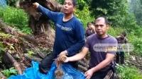 Polisi Temukan 5 Hektare Ladang Ganja di Perbukitan Madina