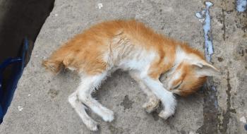 Bocah 15 Tahun Perkosa Anak Kucing Hingga Mati