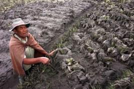 Erupsi Gunung Sinabung, Petani Merugi Rp41 Miliar