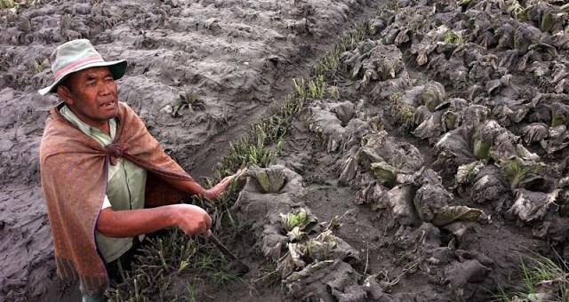 1.483 Ha Lahan Pertanian di Karo Terdampak Erupsi Gunung Sinabung