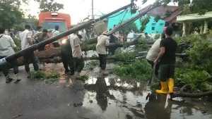 Hujan Disertai Angin Kencang Landa Binjai, Sejumlah Pohon di Pinggir Jalan Tumbang