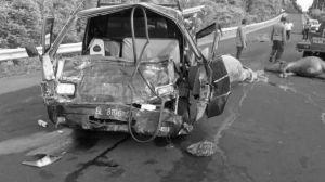 Hantam Kerbau, Sopir Mobil Pikap Dilarikan ke Rumah Sakit