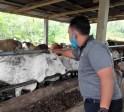 Seminggu Jelang Idul Adha, Penjualan Hewan Kurban di Padangsidimpuan Masih Sepi