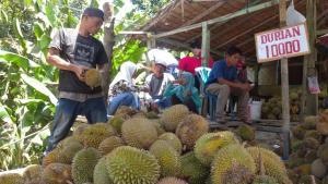 Durian Sibolga Banjiri Kabupaten Langkat