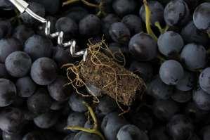 Viticulture : tout bio or not tout bio ?