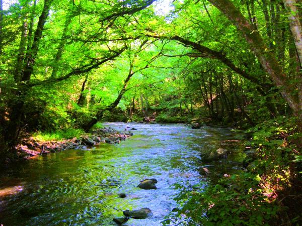 Le_Cousin_(rivière)