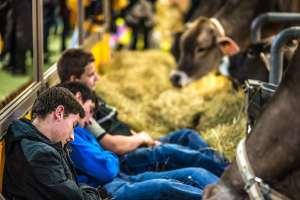 Futurs éleveurs: leur salon, nuit et jour
