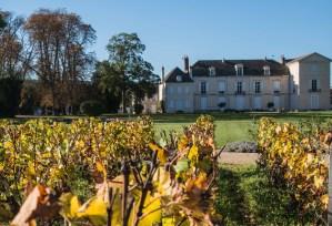 Foncier viticole: si cher aujourd'hui, et demain?