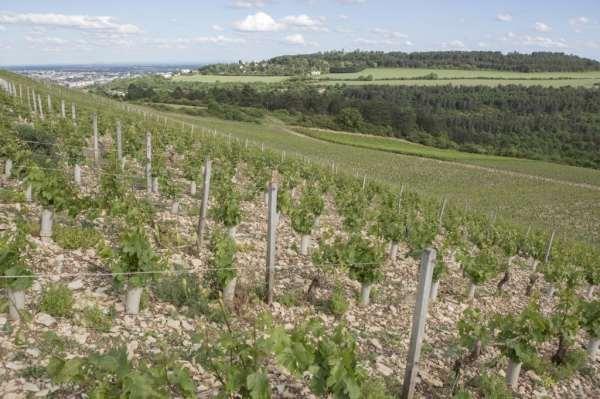 Vignoble Domaine de La Cras