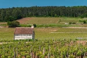 Grands crus, premiers crus, villages, régionales… les Bourguignons ont quatre appellations