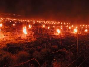 Gel : la Bourgogne viticole solidaire pour sauver sa récolte 2017