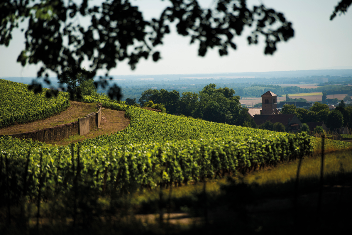 La Saint-Vincent tournante 2020 à Gevrey-Chambertin