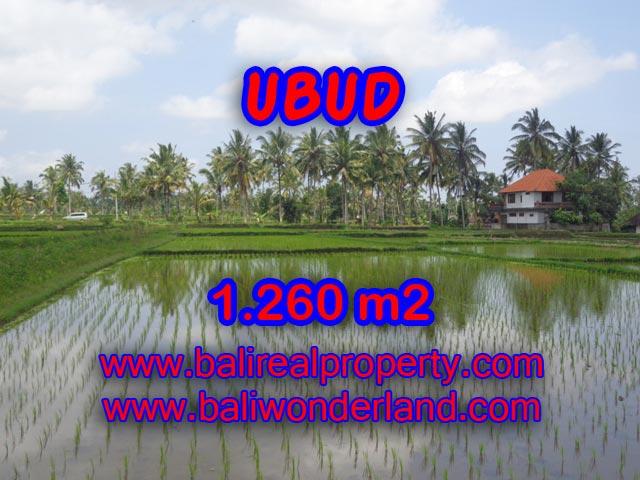 Jual tanah murah di Ubud Bali