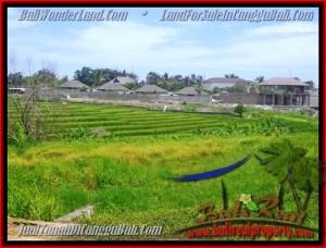 DIJUAL TANAH MURAH di CANGGU 1.450 m2 di Canggu Cemagi