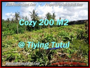 JUAL MURAH TANAH di CANGGU 200 m2  View sawah dan kebun pandan
