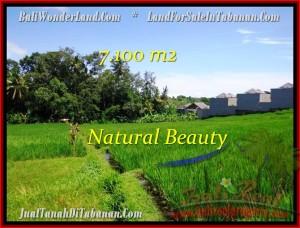 JUAL TANAH MURAH di TABANAN BALI 7,100 m2  View sawah dan Sungai