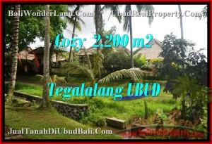 INVESTASI PROPERTY, DIJUAL TANAH MURAH di UBUD TJUB462