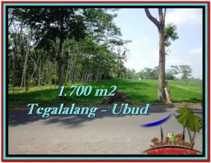 TANAH MURAH di UBUD BALI Untuk INVESTASI TJUB518