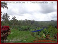 JUAL MURAH TANAH di UBUD 2,100 m2 di Ubud Tegalalang