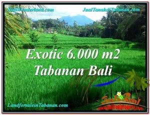 TANAH MURAH di TABANAN BALI 6,000 m2 di Tabanan Penebel