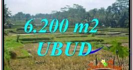 TANAH di UBUD JUAL MURAH 6,200 m2 View Sawah dan Gunung Batur