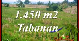 TANAH MURAH di TABANAN BALI DIJUAL 14.5 Are di Tabanan Selemadeg