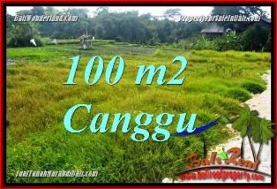 TANAH JUAL MURAH  CANGGU BALI 100 m2  VIEW SAWAH, LINGKUNGAN VILLA