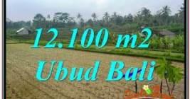 TANAH MURAH di UBUD 12,100 m2 di UBUD PAYANGAN