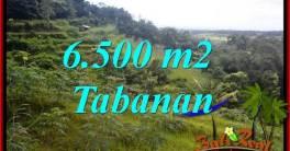 Investasi Property, Tanah Murah di Tabanan Bali Dijual TJTB416