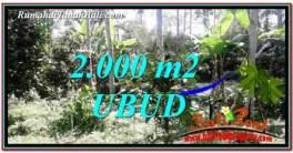 TANAH MURAH DIJUAL di UBUD BALI 2,000 m2 di Ubud Tegalalang