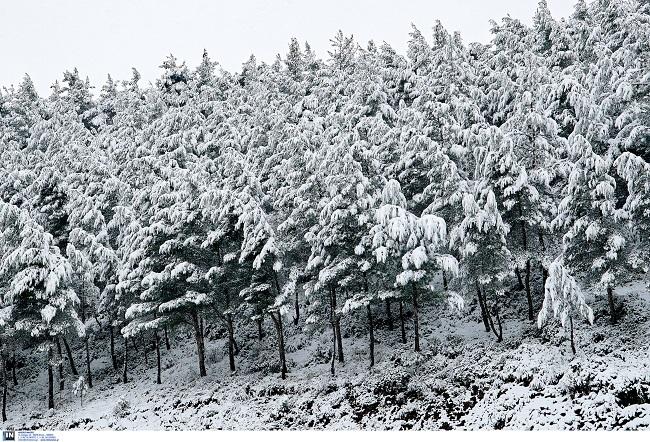 χιόνια Λαμία