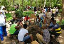 Youth in afforestation-dikoder.com