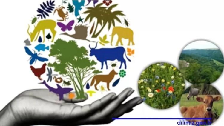Biyolojik çeşitliliğin azalmasının etkileri