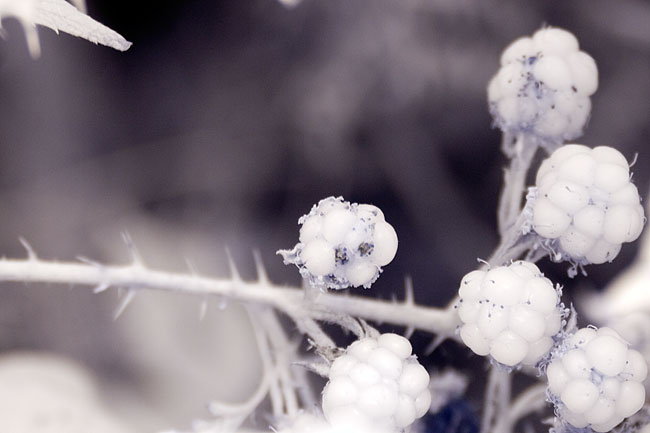 Infrared photography with the Canon 100-400 f5.6 IS L