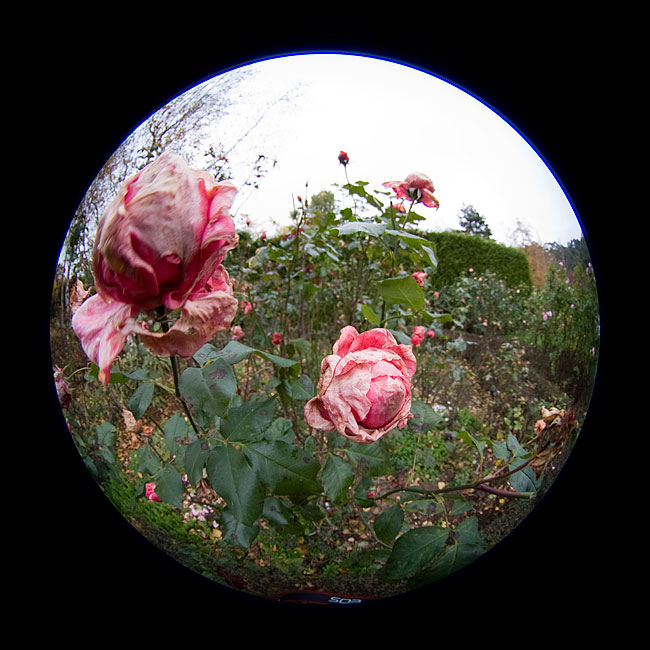 Sigma 4.5mm circular fisheye lens review closeup