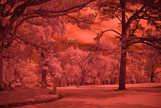 unconverted digital infrared image