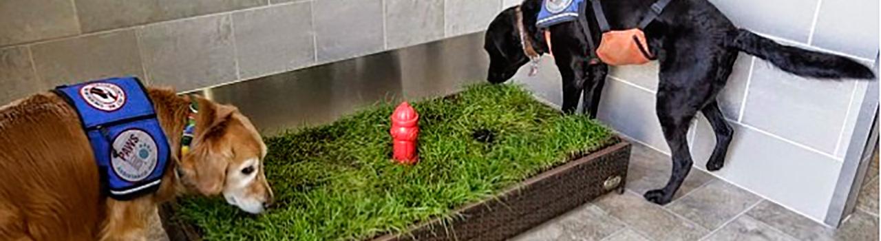 Bao para perros en el Aeropuerto de Detroit  Dinbeat
