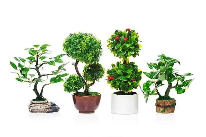 Lucky Plants to increase Wealth & Prosperity