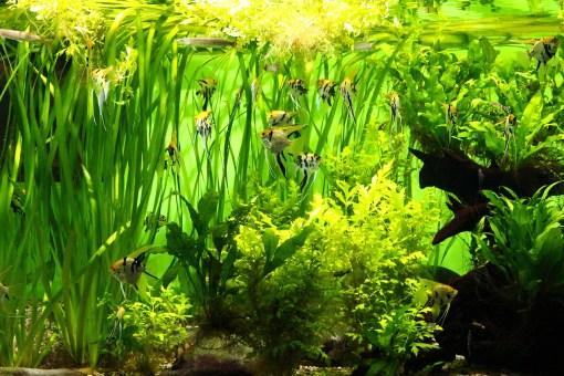Neem een aquarium