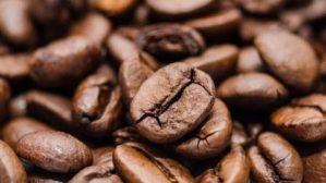 Café: concurso de grãos especiais da BSCA classifica amostras