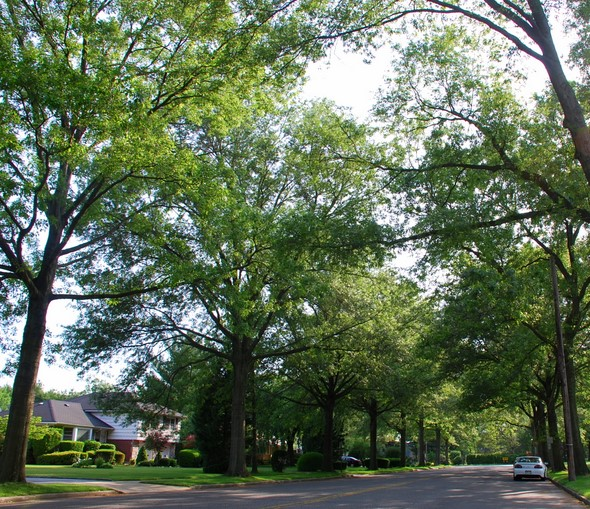 Tree lined street  Garden City New York NY photo