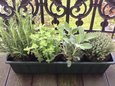 Adventures in Urban Gardening: Part I
