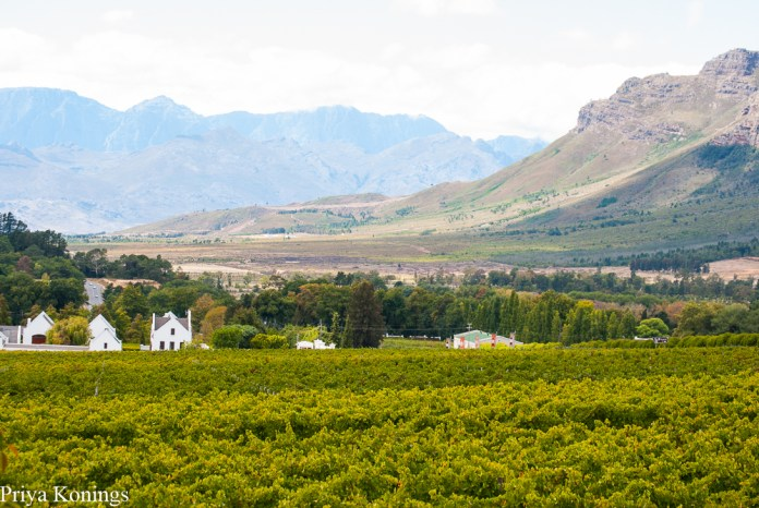 South African Escape Wine Tours
