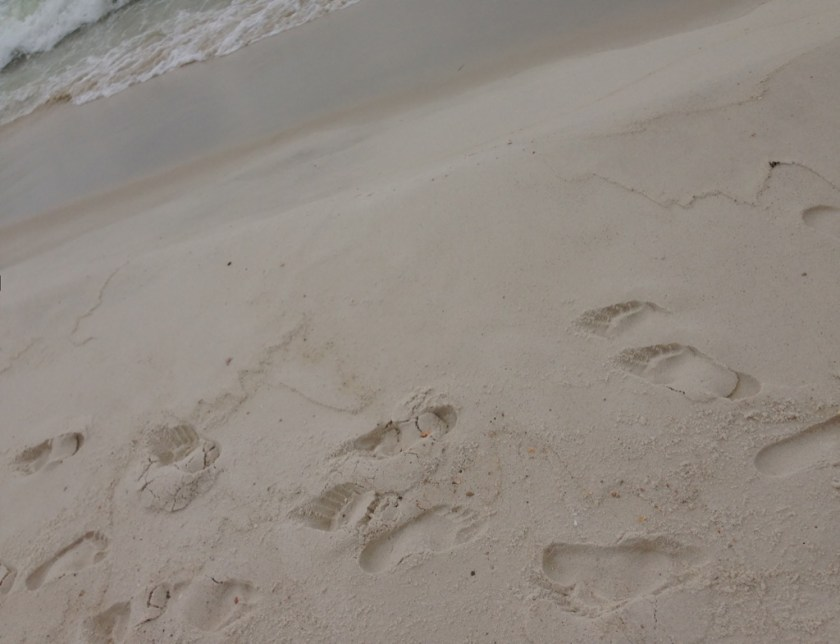 Sandy footprints Paddling- Dolphins want play? www.diningwithmimi.com