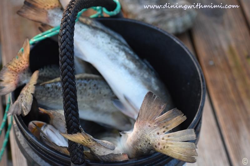 Bucket of Fish Unwind on Dauphin Island www.diningwithmimi.com