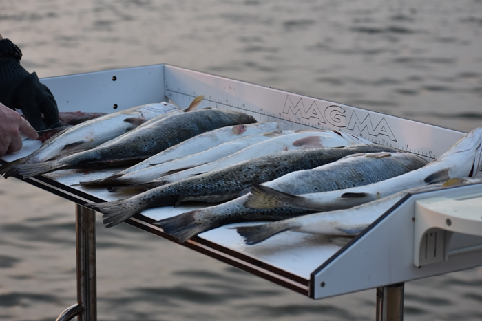 Fish Cleaning Table loaded Trout Unwind on Dauphin Island www.diningwithmimi.com