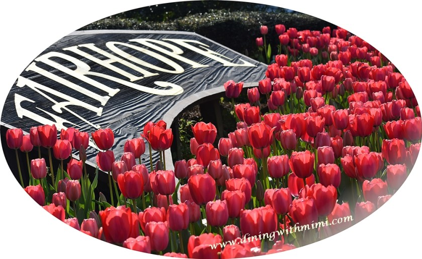 Fairhope Tulips blooming for One Fairhope Foodies Prosciutto Chipotle Cheddar Quiche www.diningwithmimi.com