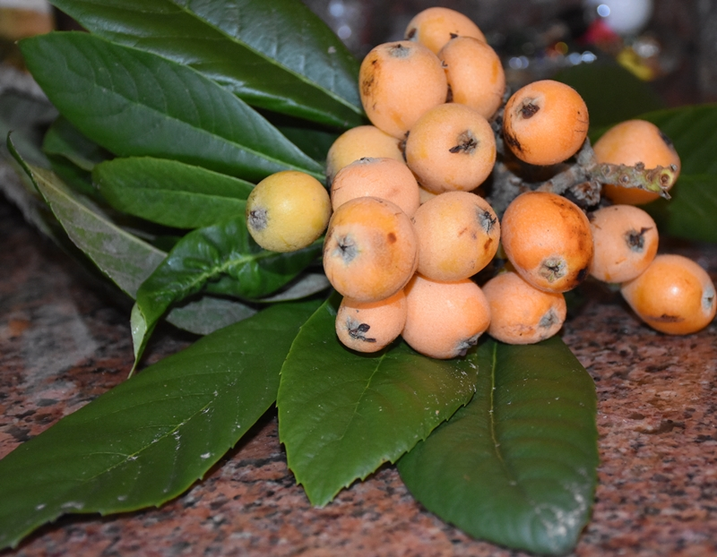 Loquat fruit and leaves Loquats- Eat, Ferment, Freeze, Preserve, Steep and Share www.diningwithmimi.com