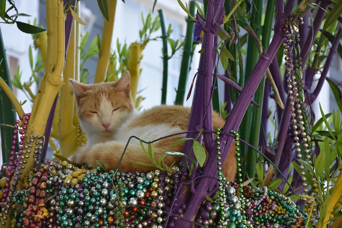 Morris the Cat on  Mardi Gras Tree on First Street Need a quickie- Drop into New Orleans for 48 hours www.diningwithmimi.com