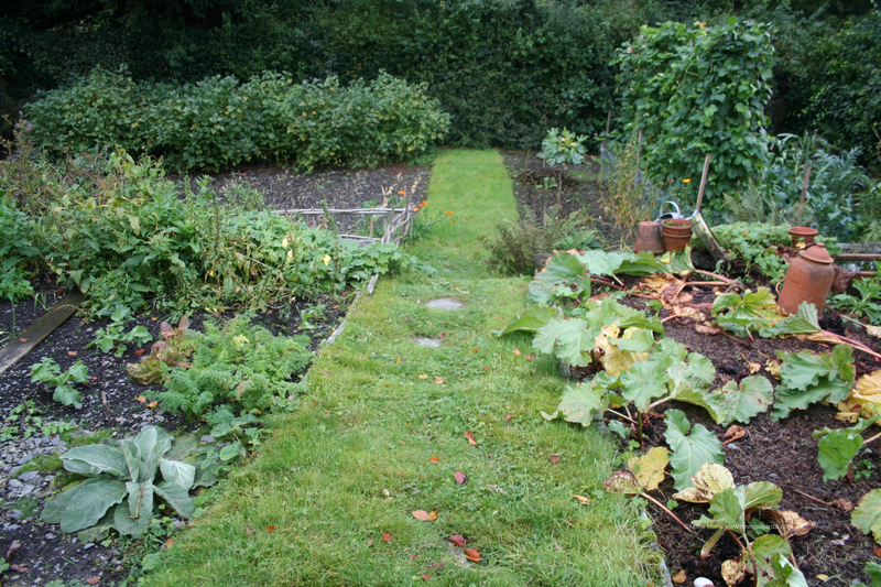 Gradina de legume. Cum o protejam de daunatori
